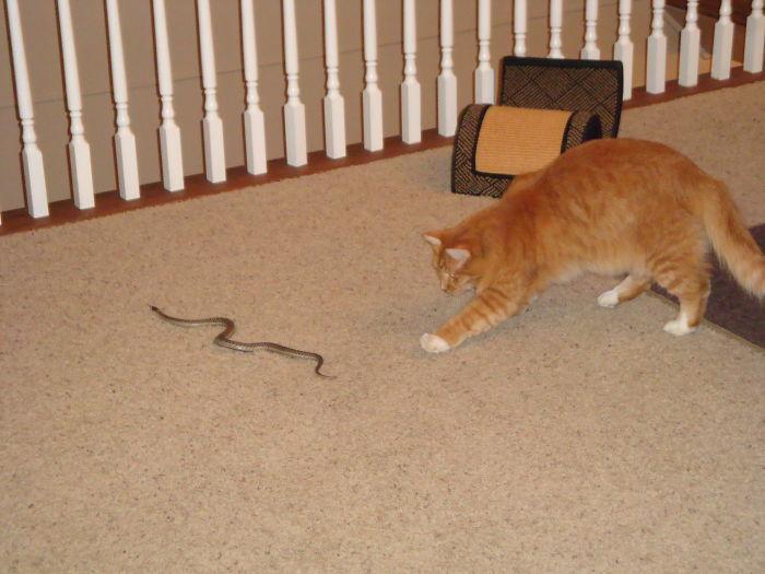 DSC02678 5ab55ca42044e  700 - Заведи кота – говорили они. Будет весело – говорили они. Но никто не предупреждал, что коты такие сволочи
