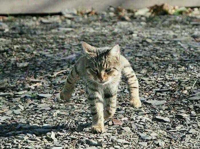 Японец превращает диковатые фотки котов в фигурки. Так как нормальные коты — прошлый век! 1