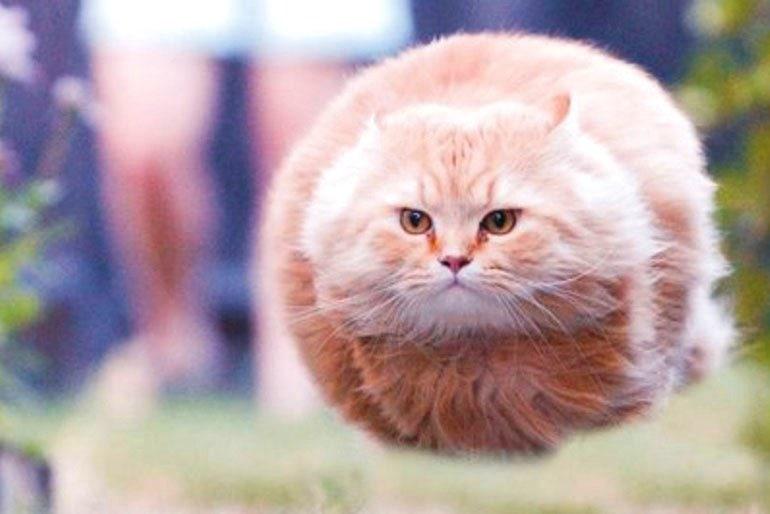 Японец превращает диковатые фотки котов в фигурки. Так как нормальные коты — прошлый век! 10