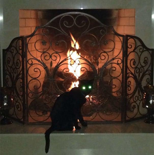 Interrupted My Cat Summoning Satan