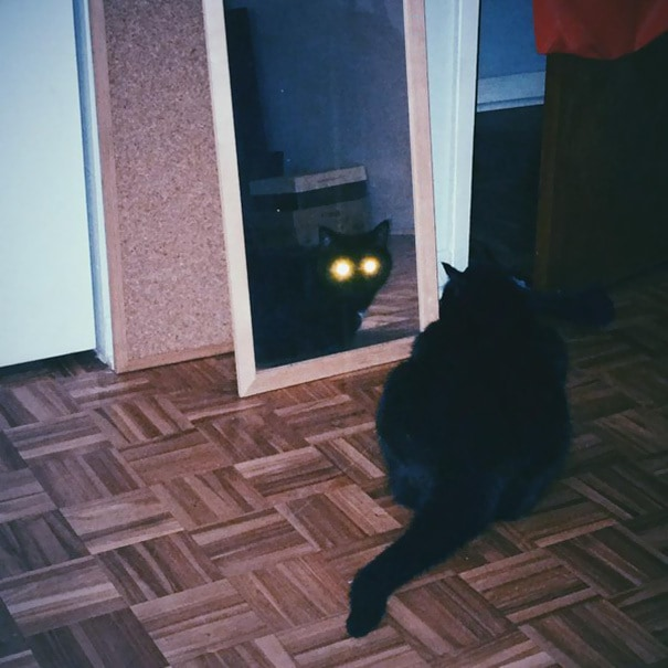 When You Inadvertently Catch Your Cat Plotting To Kill You In The Middle Of The Night
