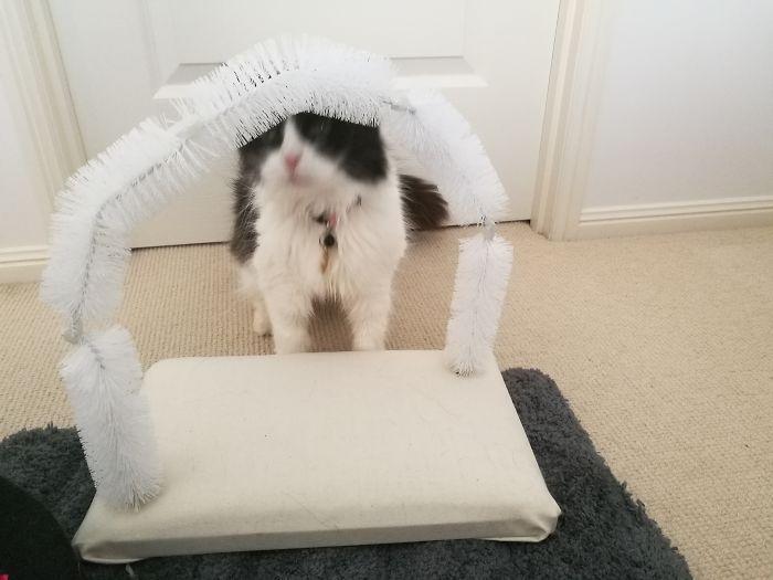 Сделано щетинной аркой из бутылочных кистей для моей кошки, чтобы жениться