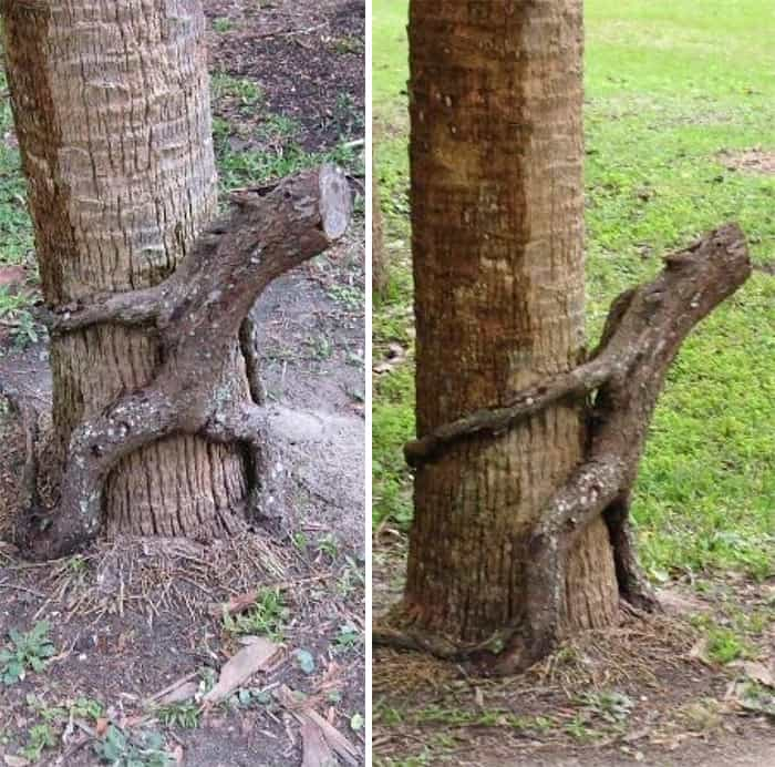 Редкое рогатое дерево