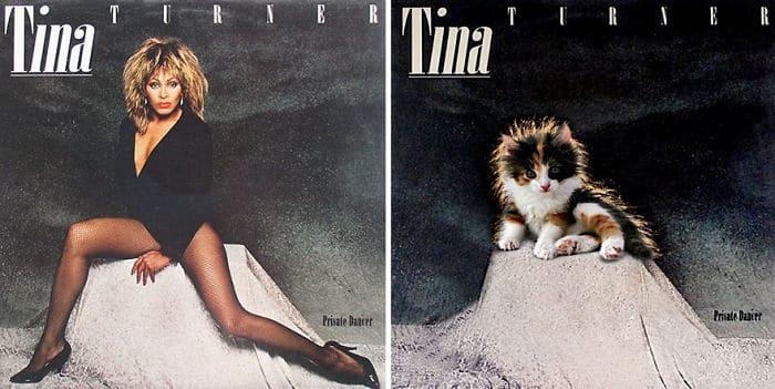 Смешная-Котик-Альбом-Covers