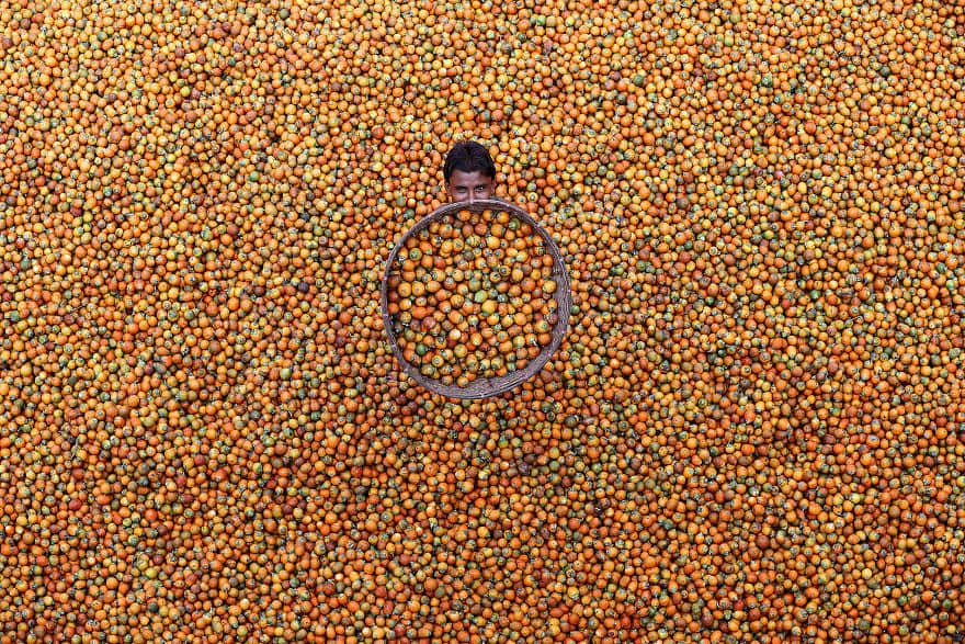 Betel Nut By M. Yousuf Tushar (Honorable Mention In General Color Category)