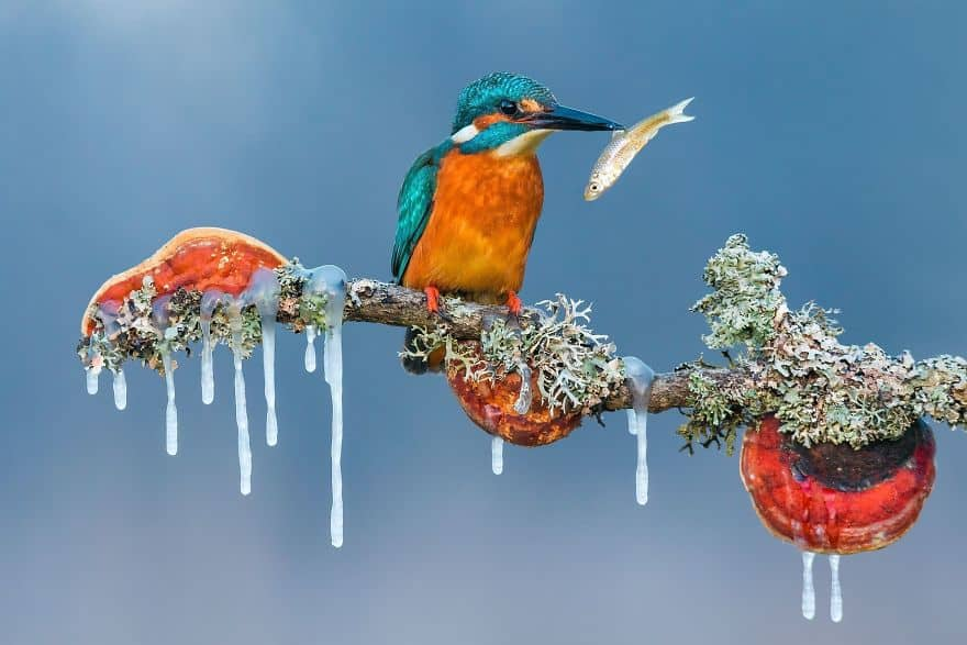 Peak By Petar Sabol (Remarkable Award In Animals In Their Environment Category)