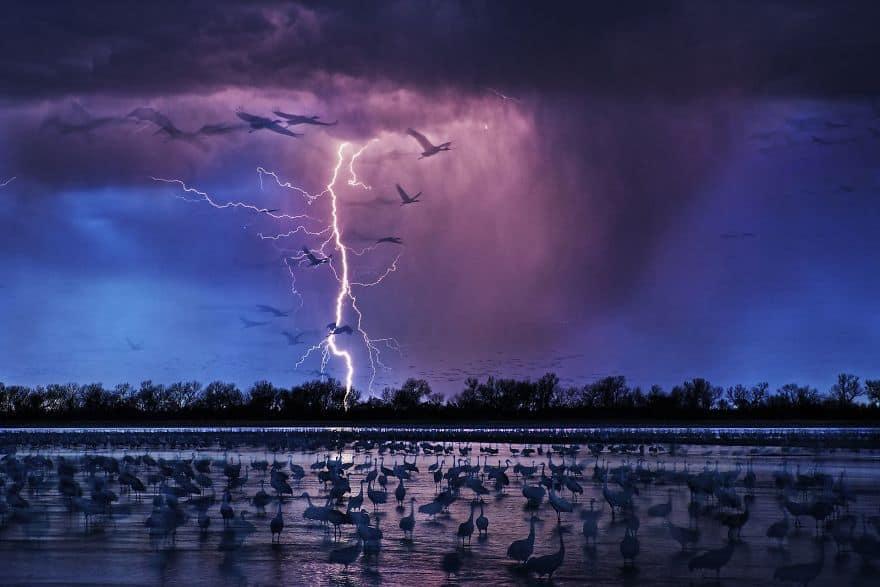 Sand Hill Cranes By Randy Olson (Siena International Photo Awards Photo Of The Year)