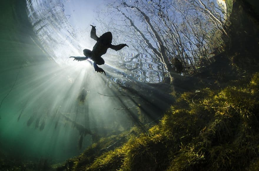 Prince Of The Waters By Yannick Gouguenheim (3rd In The Beauty Of The Nature Category)
