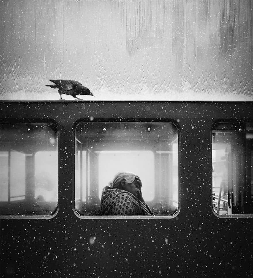Crow Of Lviv By Jack Savage (1st In General Monochrome Category)