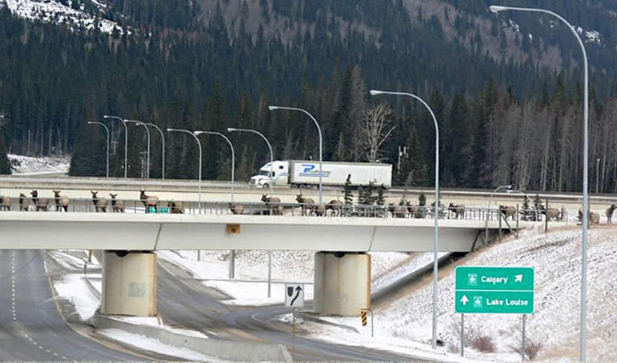 Wildlife Overpass In Banff, Alberta