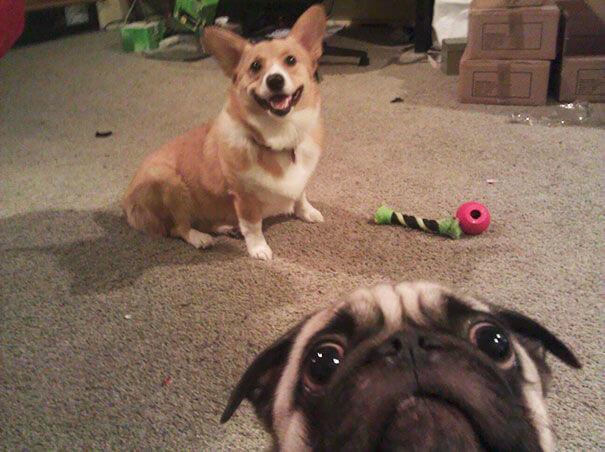 animal selfies 3