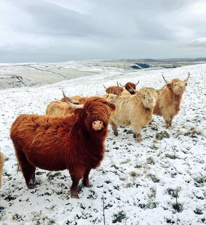 These Cows Look Like They
