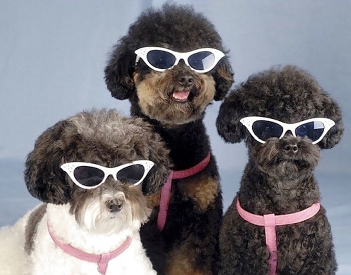 Why These Dogs Look Like They About To Drop The Most Soulful Motown Album Of 1965