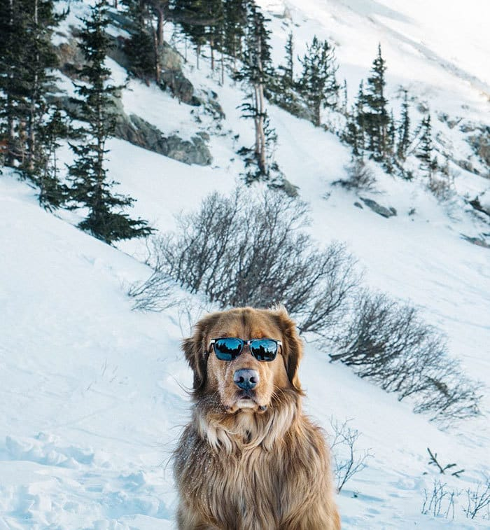 This Retriever Is Finally Coming Out With His Solo Album