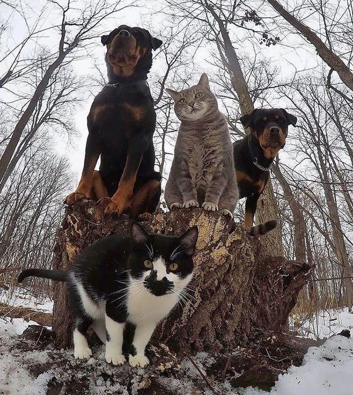 The Meow-Tang Clan Pose For Their Debut Rap Album