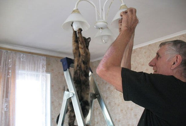 животные делают люди вещи 7 (1)