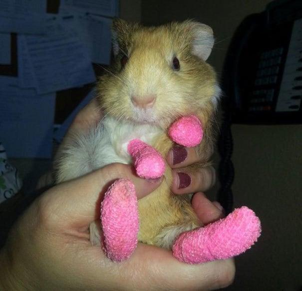 Мы обращаемся Этот молодой подопытным кроликом для Бернса на ее ногах