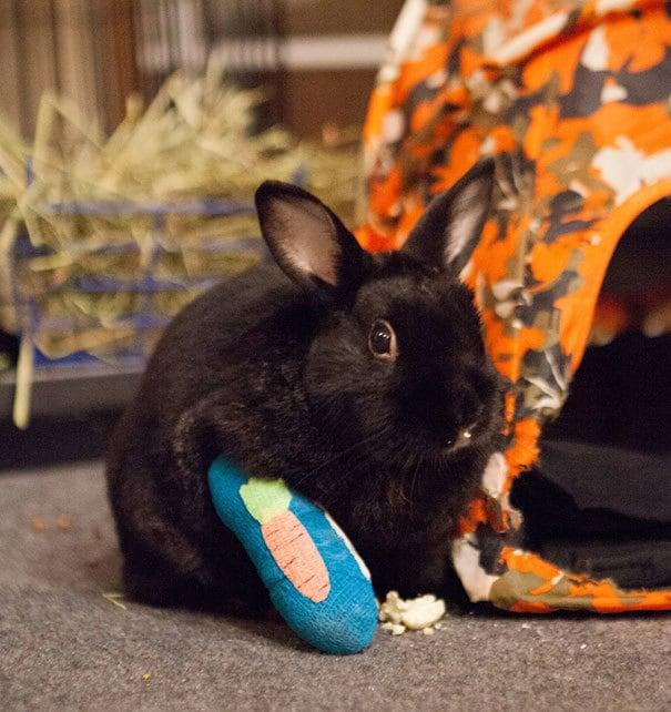 Мой Кролик поранил ногу, но они дали ему устрашающий Cast !!