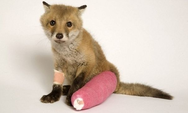 Детские Fox В ролях