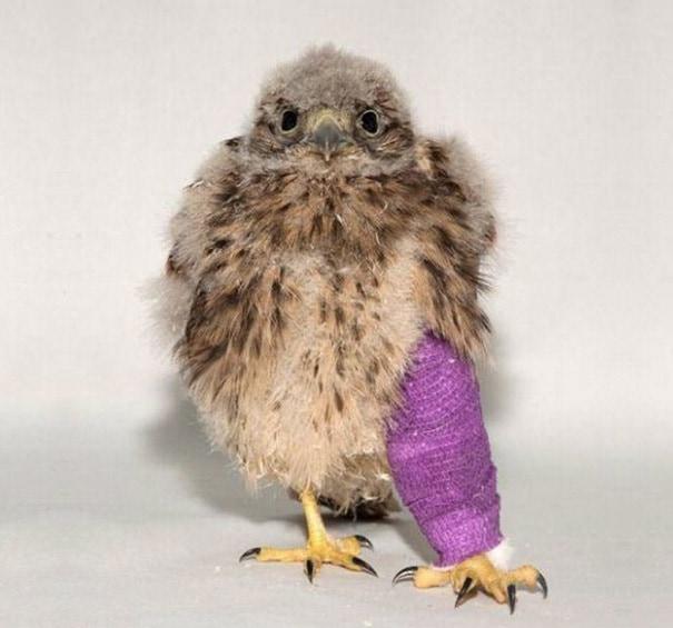 Кевин Маленький Kestrel находится на пути к сделать скорейшего выздоровления
