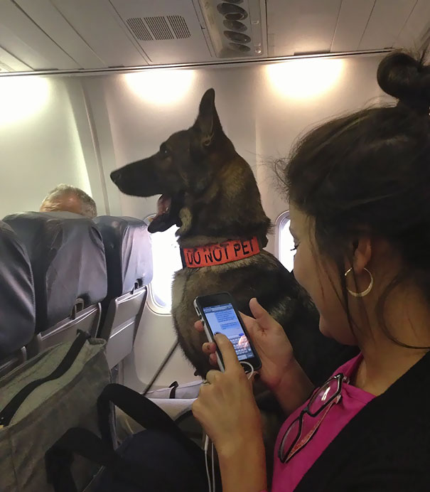 On My Flight Tonight, I Sat Two Seats Away From An Air Force K-9 Bomb Dog. The Dog Had Its Own Seat And Everything