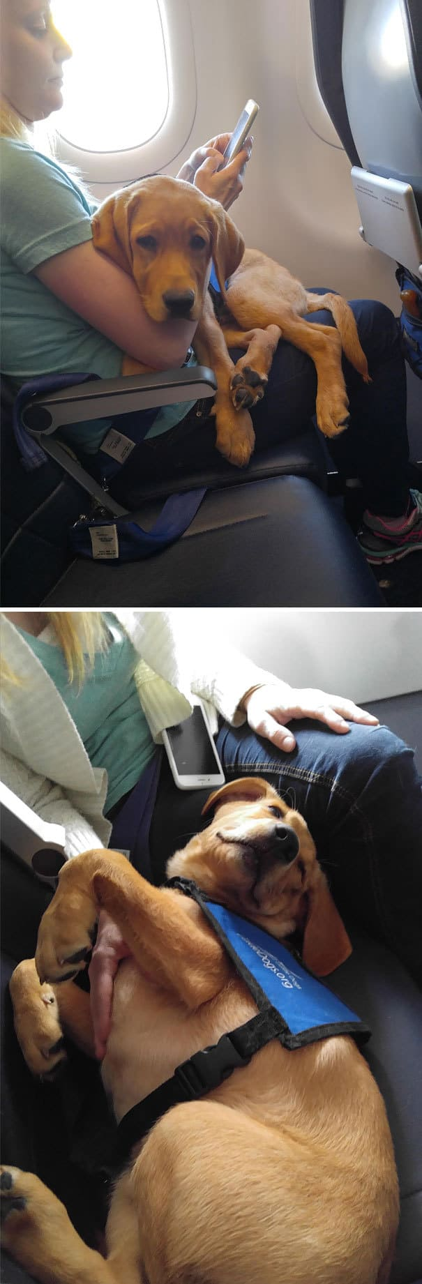 Licked, Kicked And Sniffed On Plane Flight