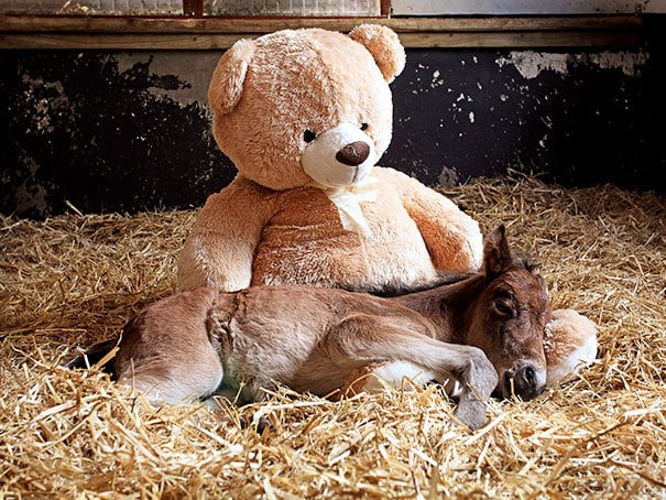 Breeze Slept With The Teddy Every Night After She Was Found Stumbling Alone Through The Moors