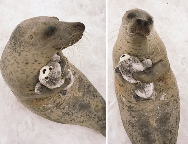 This Adorable Seal Got A Special Present From The Zoo Staff And Couldn
