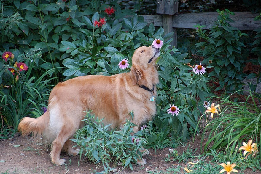Molly Pauses For A Moment To Smell A Flower