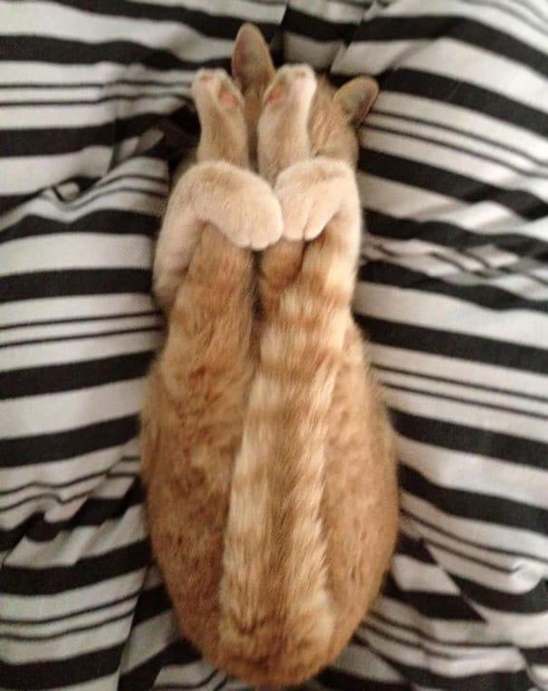 Just My Cat заниматься йогой