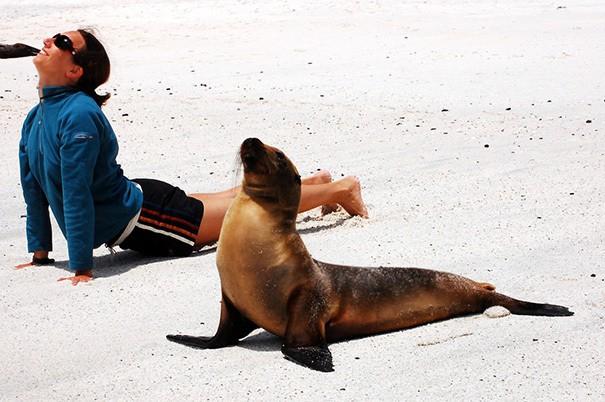 Йога С Морской лев