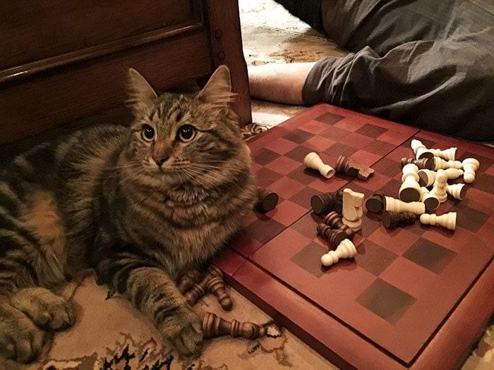 Думаете, вы можете играть в шахматы вокруг нее? Подумайте еще раз. Она всегда выигрывает