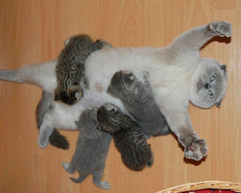 2. Так теперь выглядит моя жизнь животные, мама, фотография