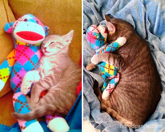 Mykos And Mr. Monkey. Then And Now