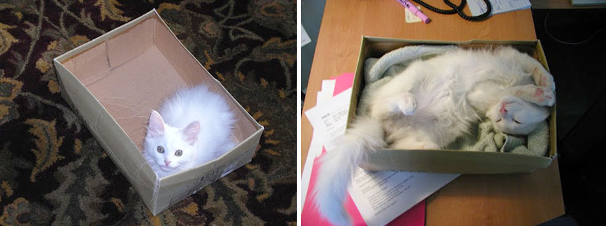 My Cat In His Favourite Box... Then And Now
