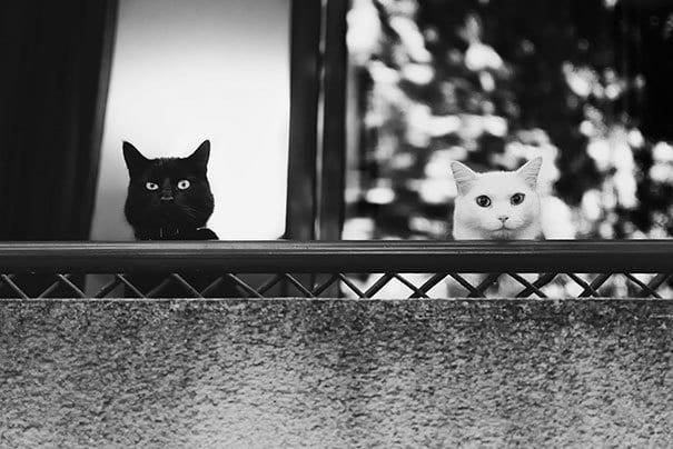 Соседи