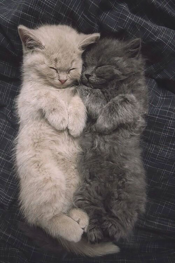 Очаровательные котята Sleeping