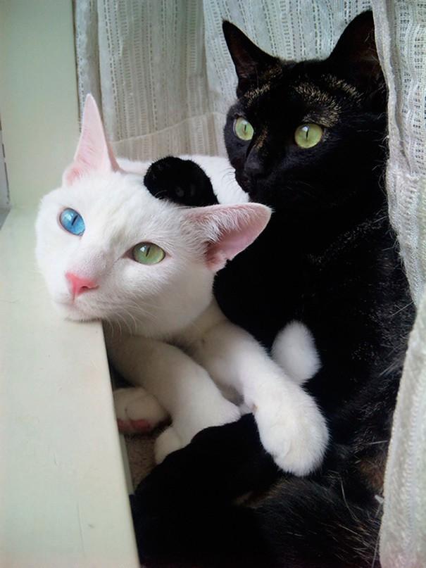 Эти красивые кошки