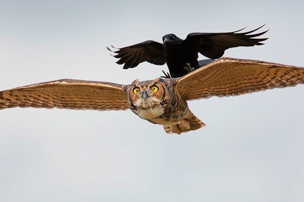 Fly Still, I