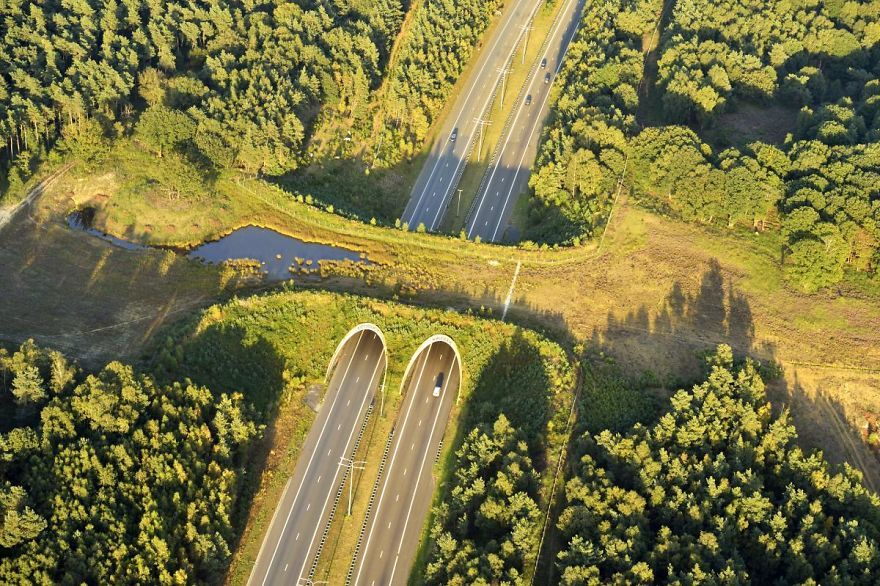 Wildlife Crossing In The Netherlands