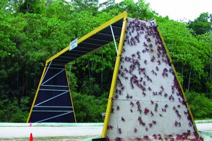 Crab Bridge In Christmas Island, Australia