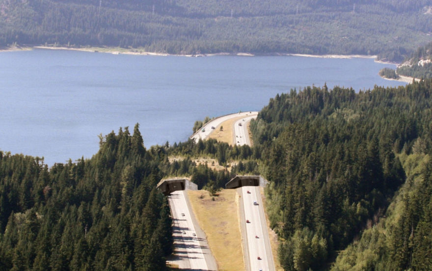 Wildlife Overpass Near Keechelus Lake
