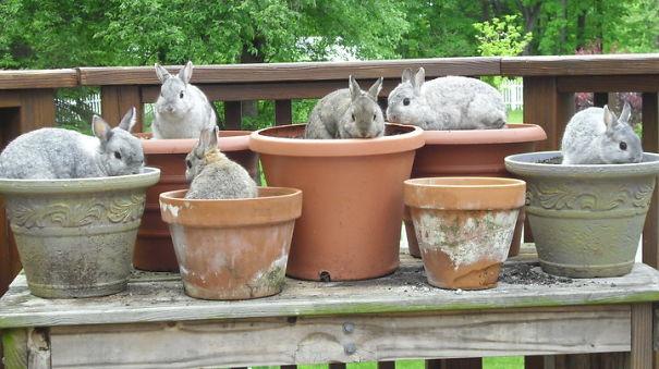 Our Bunny Gang