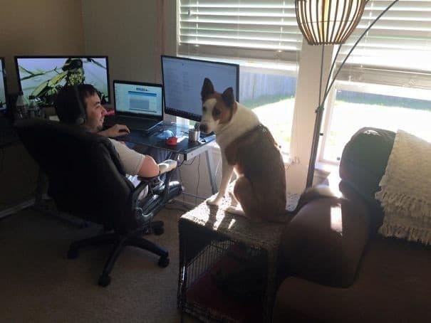 Я хочу работать, как ты! Эти забавные животные, животные, забавно, зверские шутки, смешно, собаки, ты не поверишь, фото