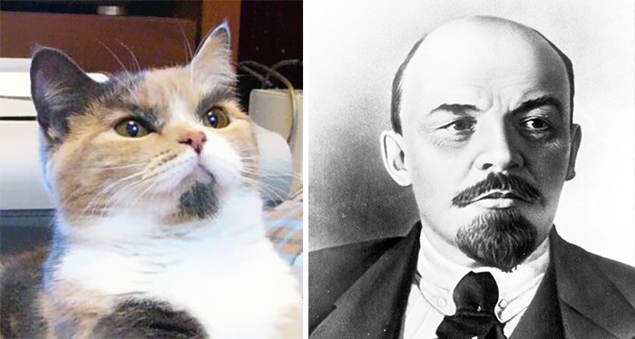 This Cat Looks Like Lenin