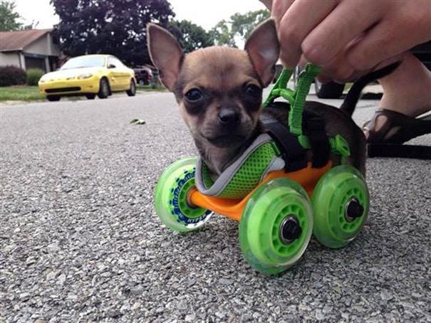 Сосед 3D напечатал Walker Для Его калекой маленький приятель