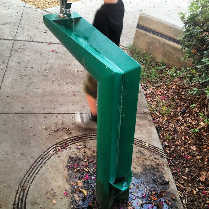 This Drinking Fountain Has A Catch For Dogs