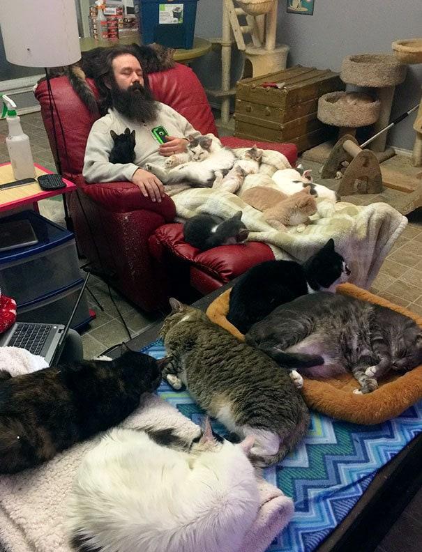 Волонтерство при спасении кошек