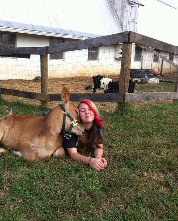Little Cow Looks So Happy