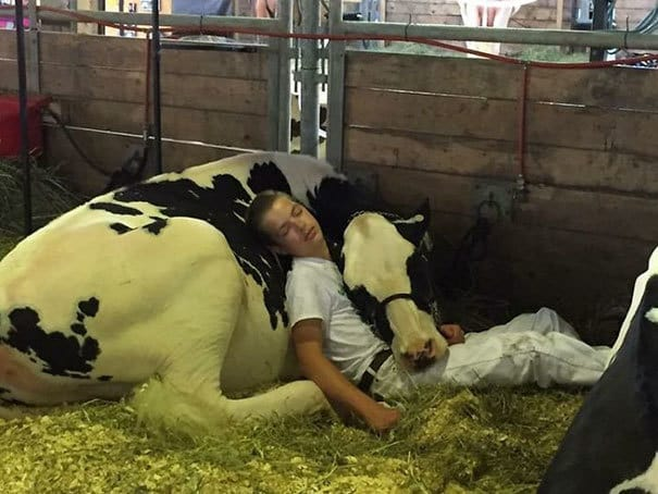 Boy And His Cow Lose Out At Dairy Fair